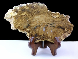Stromatolite Ancient Life Display Specimen