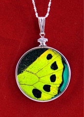 Birdwing Authentic Butterfly Wing Jewelry