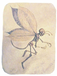 Fossil Fairy - Spoof Gift