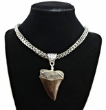 Megalodon Fossil Shark Tooth Pendant Necklace
