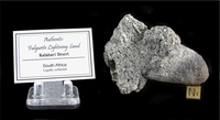 Authentic Fulgurite Lightning Sand XL - South Africa