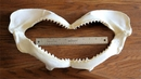 Shark Jaws Extra Large 20""