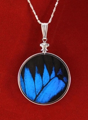 Authentic Butterfly Wing Jewelry Sterling