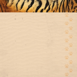 2SYT At The Zoo: Tiger 12 x 12 Paper