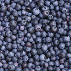 Breakfast Foods: Blueberries 12 x 12 Paper