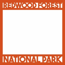 2SYT National Parks: Redwood Forest 12 x 12 Overlay Laser Die Cut