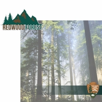 National Parks: Redwood Forest 2 Piece Laser Die Cut Kit