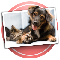 Cat, Dog and Pet Scrapbooking