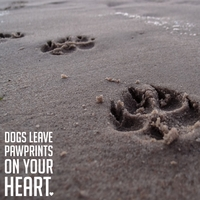Simple Sayings: Pawprints 12 x 12 Paper