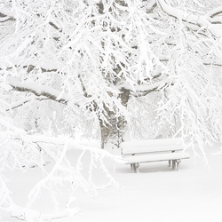 Snowy Scenes: Snowy Park Bench 12 x 12 Paper