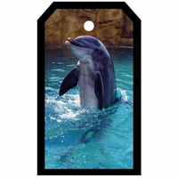 SYT Tag-UR-It Dolphin Photo Tag