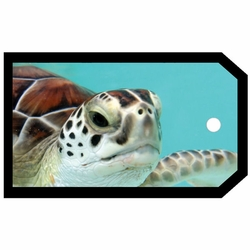 SYT Tag-UR-It Turtle Photo Tag