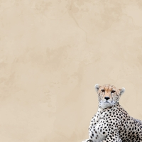 Zoo Animals: Cheetah 12 x 12 Paper