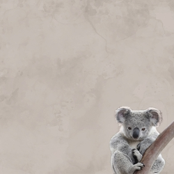 Zoo Animals: Koala 12 x 12 Paper