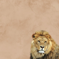 Zoo Animals: Lion 12 x 12 Paper