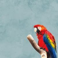 Zoo Animals: Macaw 12 x 12 Paper