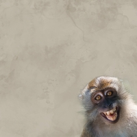 Zoo Animals: Monkey 12 x 12 Paper