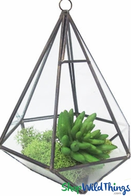 Candle Holders, Hexagonal Glass Terrariums | Hang Or Tabletop |  ShopWildThings.com