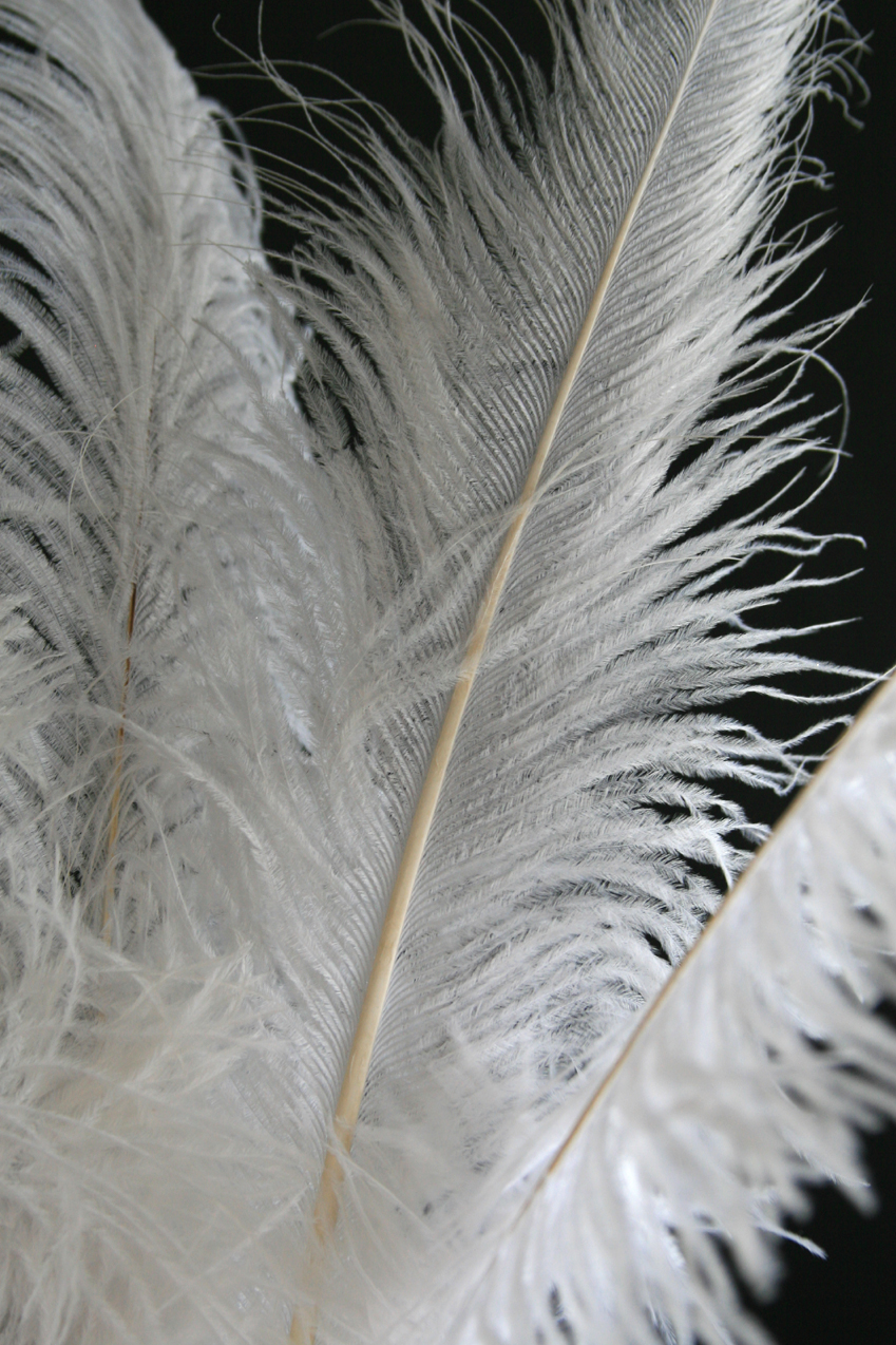 White Ostrich Feathers, Feathers for Eiffel Towers Vases ...