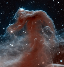 Horse Head in Infrared