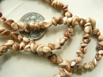 "Orchid Shell Beads 5mm average size 16"" strands"