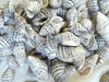 Sea Shell Bead White and Black choice of 80 or 160 gram bag