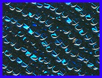 Silverlined Montana Blue 8/0 Seed Beads