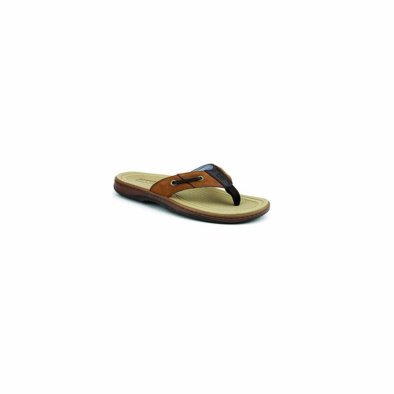 a492859241dd Sperry Baitfish Thong Sandals