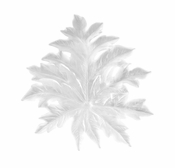 Daum Crystal Born�o Large White Wall Leaf by Emilio Robba