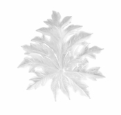 Daum Crystal Born�o Small White Wall Leaf by Emilio Robba - Long Fixing