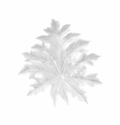 Daum Crystal Born�o Small White Wall Leaf by Emilio Robba - Short Fixing