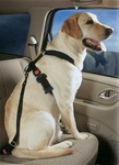 Dog Vehicle Harness