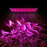 225 High Power 12V Red Blue LED Plant Grow Light Panel
