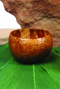 Coconut Cup Costume