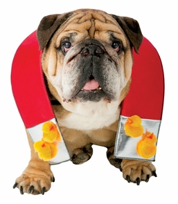 Zelda Chick Magnet Dog Xs/s Costume