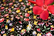 Stretch Cotton Prints Fabric Black Marigold Pink Floral 21 yards