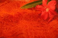 Toboggan Orange Novelty Designer Knit Fabric 11 yards