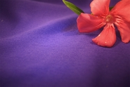 Violet Washable Knit Fabric 15 yards