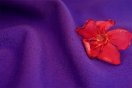 Wild Violet Washable Knit Fabric 15 yards
