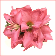 Day Lily Large Hair Clip