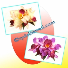 Large Catteya Orchid Hair Clip