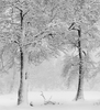 NEW LIMITED EDITION PRINT BY ANNE LARSEN - TWO TREES IN SNOW
