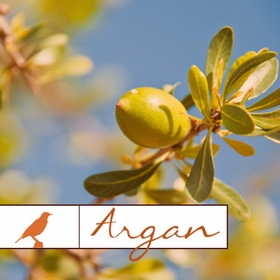 Shop Argan Oil
