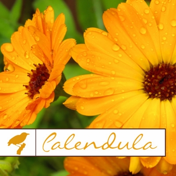 Calendula Collection