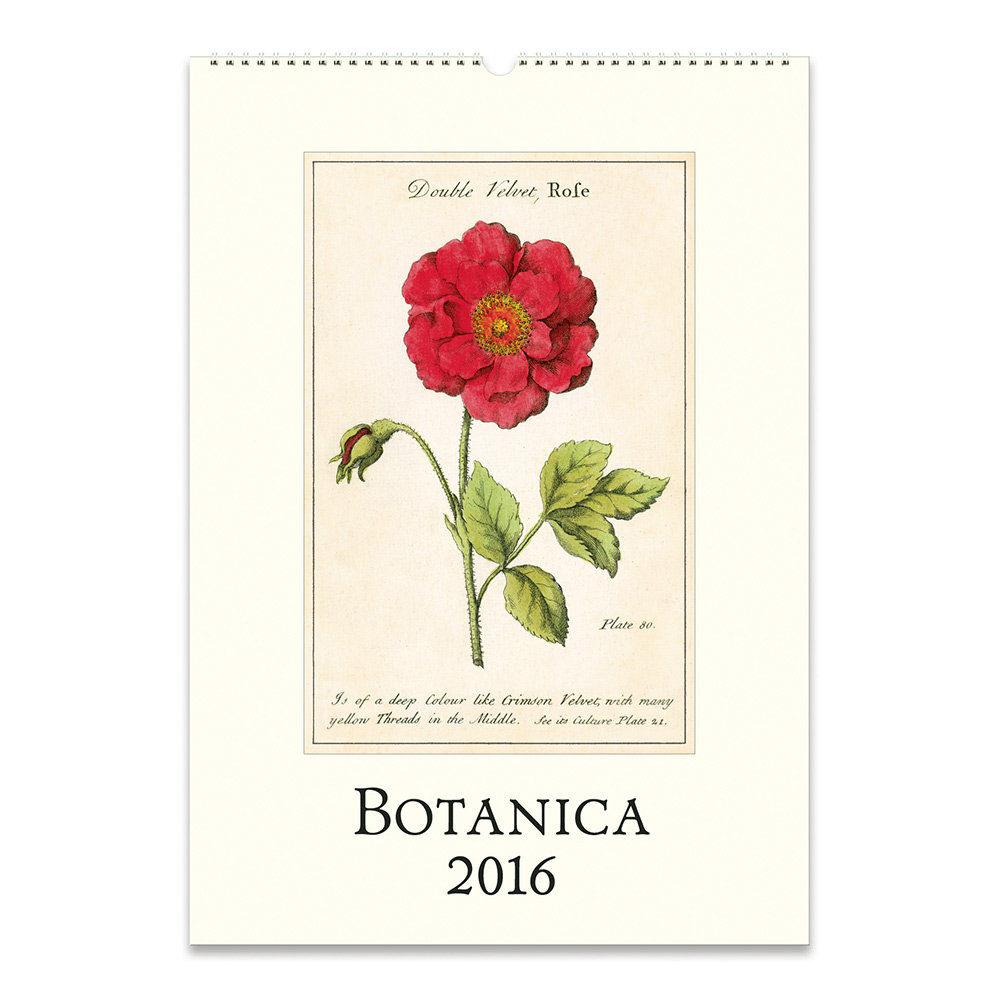 Secret Garden: Cavallini Papers 2016 Wall Calendar