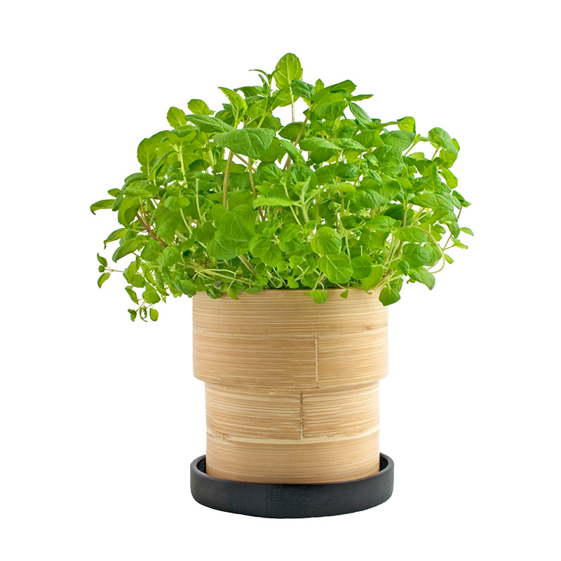 Potting Shed Creations Bamboo Grow Pots Creative Gifts