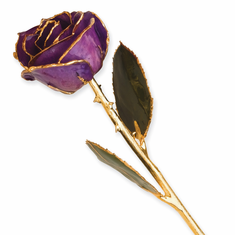 Lacquer Dipped Gold Trim Lilac Rose