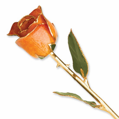 Lacquer Dipped Gold Trim Orange Rose