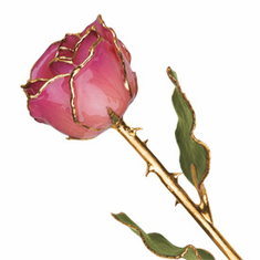 Lacquer Dipped Gold Trim Pink Picasso Rose