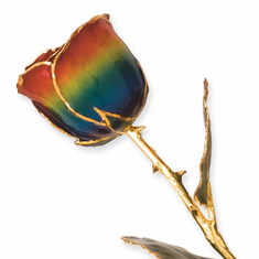 Lacquer Dipped Gold Trim Rainbow Rose